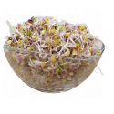Ředkvička - semínka na klíčení 500 g